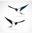 bird swallows design on white background vector image vector image