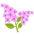 Branch of lilac flowers vector image vector image