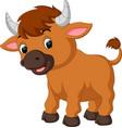 cute bull cartoon vector image vector image