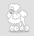 elegant groomed poodle with hairstyle and feather vector image vector image
