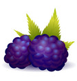 forest blackberry with leaves vector image vector image