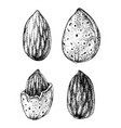 hand drawn almonds vector image vector image