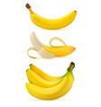 realistic ripe bananas vector image