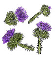 watercolor milk thistle flowers set isolated on vector image vector image