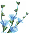 Beautiful Watercolor Blue Yellow flowers vector image