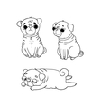 Cute Pugs Dogs vector image vector image