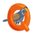 letter Q with animal quail for kids abc education vector image vector image