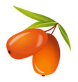 sea buckthorn with leaves icon vector image