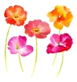 Watercolor flowers on a white vector image vector image