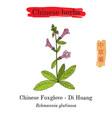 medicinal herbs of china foxglove rehmannia vector image vector image