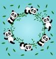pandas in a circle vector image vector image