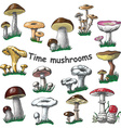 collection of isolated mushrooms vector image