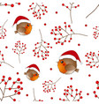 red robin bird santa claus and berry on white vector image