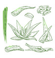 sketch of aloe vera elements silhouettes vector image