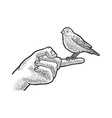 canary sitting on finger sketch vector image vector image