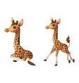 cute giraffe cartoon collections vector image