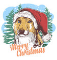 dog christmas santa claus hat vector image vector image