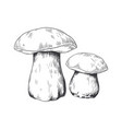hand drawn porcini forest plant pencil sketch of vector image vector image