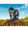 Baboon standing on rock vector image