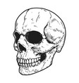 hand drawn human skull on light background design vector image vector image