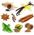 Herbs and spices set vector image vector image