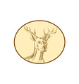 Red Stag Deer Head Circle Etching vector image vector image