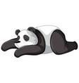 panda sleeping on white background vector image