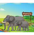 A small and big elephant with a signboard vector image