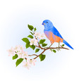 bluebird thrush small songbirdon on an apple tree vector image vector image