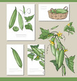 cucumber set with visitcards and greeting vector image
