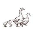 goose and duck farm animals sketch hand drawn vector image vector image