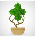 Green foliage houseplant alphabet Plus symbol vector image vector image