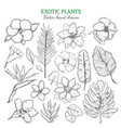hand drawn exotic plants set vector image vector image