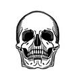 skull print from wood cut vector image