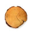 Tree stump round cut with annual rings vector image vector image