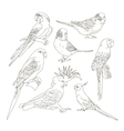 Different Parrots set vector image vector image