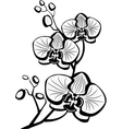 sketch of orchid flowers vector image