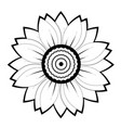 sunflower flower black and white on white vector image