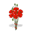 Bouquet of red poppies tied with a ribbon vector image