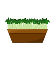 flax sprouts potted in brown container color card vector image