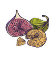 gorgeous botanical drawing of tasty fresh and vector image vector image