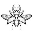 monochrome stag beetle drawing vector image