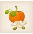 Pumpkin and pumpkin seeds vector image