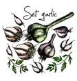 Set of garlic vector image vector image