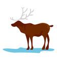 alaska deer icon flat style vector image