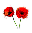 colored poppy flowers vector image
