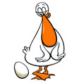 duck bird farm cartoon character with egg vector image vector image