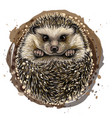 hedgehog artistic drawn color portrait vector image