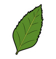leave plant natural flora foliage image vector image vector image