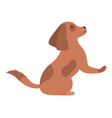 pedigree dog sitting animal doggy looking vector image